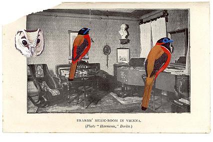 Bird_collage3