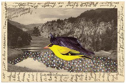 Bird_collage4