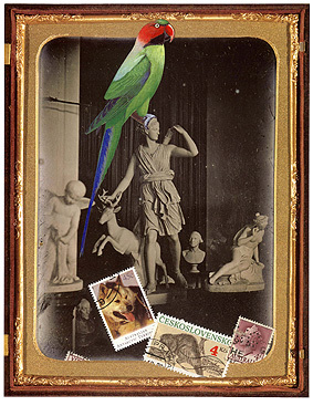 Bird_collage6