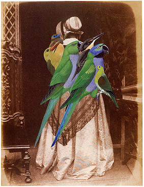 Bird_collage7
