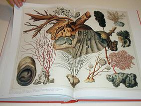 Etonnant Albertus Seba Cabinet Of Natural Curiosities Www Stkittsvilla Com