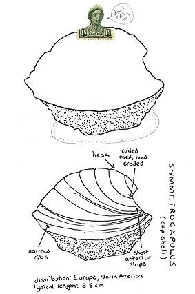 Fossil_zine2