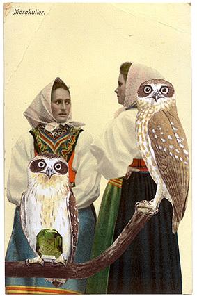 Gracia_haby_owl_companions