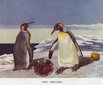 Gracia_haby_penguin