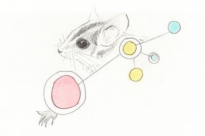 July_possum_1
