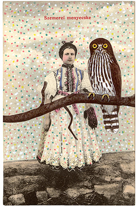 Owl_companion