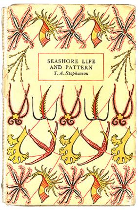 Seashore_life_and_more