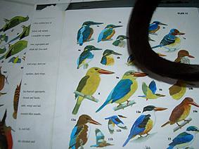 Seen_jade_birds