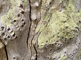 Starnaud_tree_holes