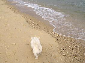 Wilbur_beach10