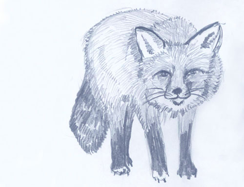 Fox Pencil Drawing Pencil Drawing Elaine Haby.}
